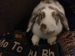 "Sneakers the ""Chemistry Bunny"""